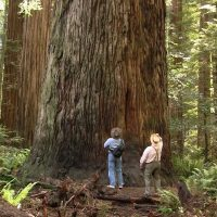 The Magic of California's Redwood Forests