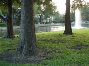 University Park